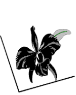 Black Orchid Notary